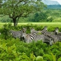 arusha-national-park-min