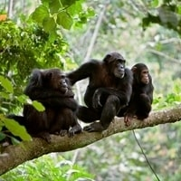 gombe-national-park-min
