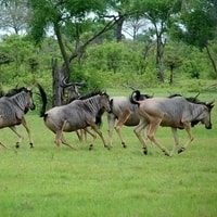 selous-game-reserve-min